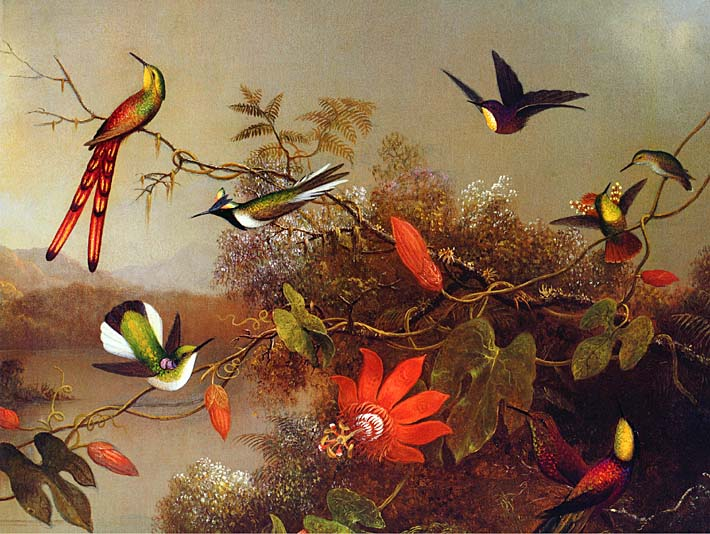 Martin Johnson Heade Tropical Landscape with Ten Hummingbirds stretched canvas art print