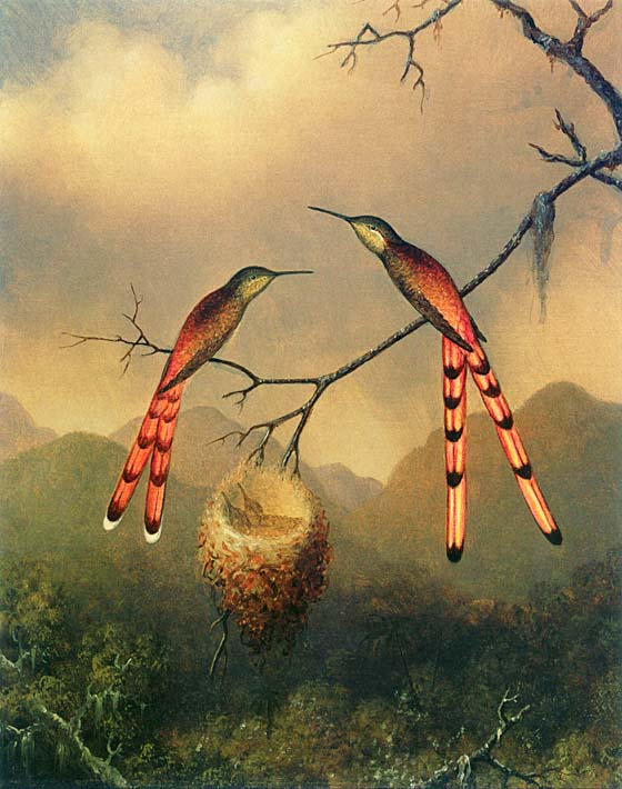 Martin Johnson Heade Two Hummingbirds with their Young stretched canvas art print