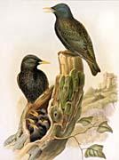 John Gould Starling Family