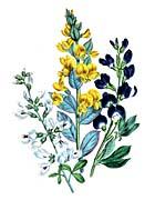 Jane Loudon Floral Art
