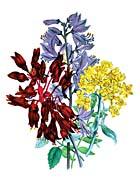 Jane Loudon Perennial Flowers