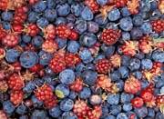U S Fish And Wildlife Service Wild Berries