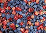 U S Fish And Wildlife Service Wild Berries canvas prints
