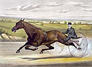 Currier And Ives Maud S Trotter Race Horse