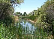 U S Fish and Wildlife Service Corn Creek Springs