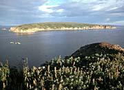 U S Fish And Wildlife Service Chamisso Island