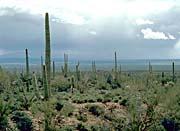 U S Fish And Wildlife Service Saguaro Cactus