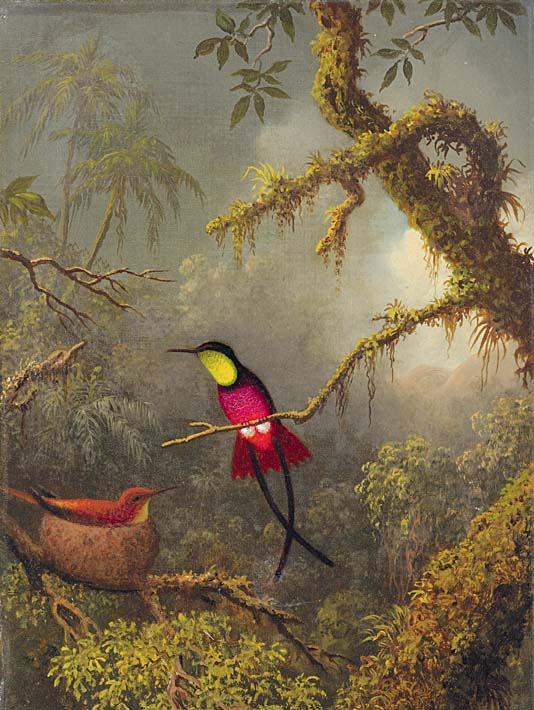 Martin Johnson Heade A Pair of Nesting Crimson Topaz Hummingbirds stretched canvas art print