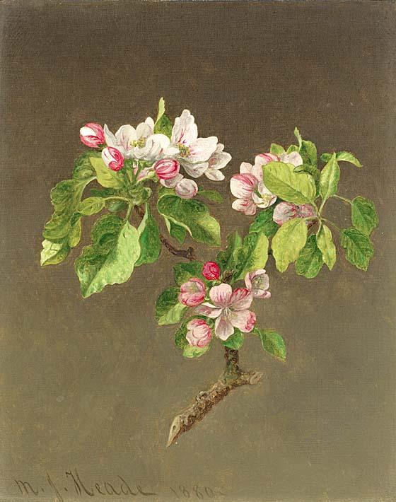 Martin Johnson Heade Apple Blossoms stretched canvas art print