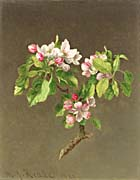 Martin Johnson Heade Apple Blossoms canvas prints