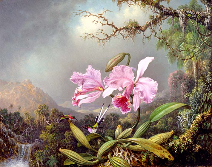 Martin Johnson Heade Study of an Orchid stretched canvas art print