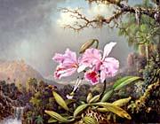 Martin Johnson Heade Study Of An Orchid canvas prints