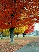 Ray Porter An Autumn Landscape