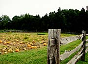 Ray Porter Pumpkin Patch