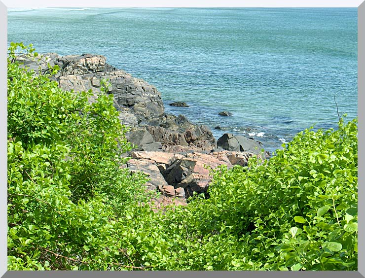 Brandie Newmon Marginal Way, Ogunquit Maine stretched canvas art print