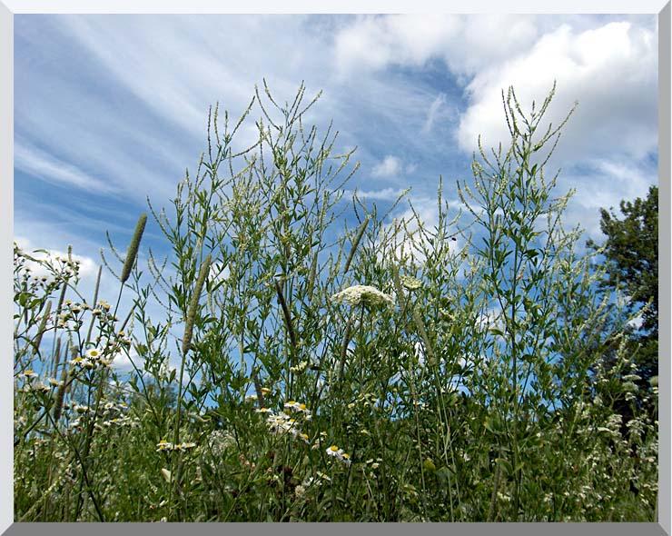 Brandie Newmon Wild Flower Field in Easthampton, Massachusetts stretched canvas art print