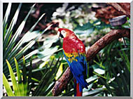 Brandie Newmon Macaw Profile stretched canvas art