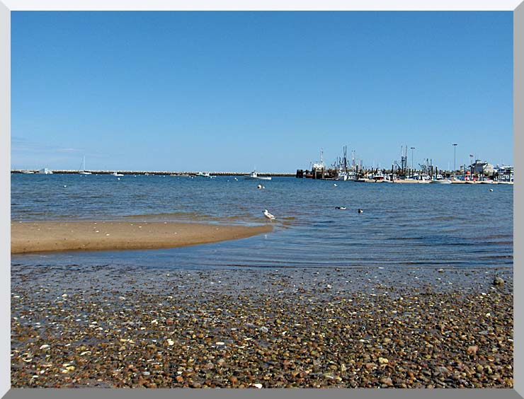 Brandie Newmon Provincetown Harbor stretched canvas art print