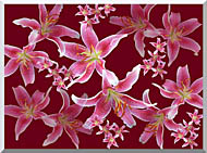 Brandie Newmon Lilies stretched canvas art
