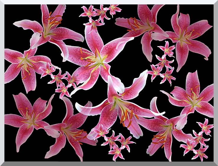 Brandie Newmon Lily stretched canvas art print