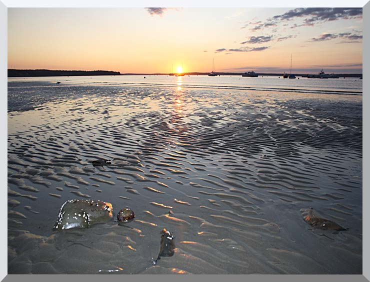 Kim O'Leary Photography Rising Star Sunrise, Maine stretched canvas art print