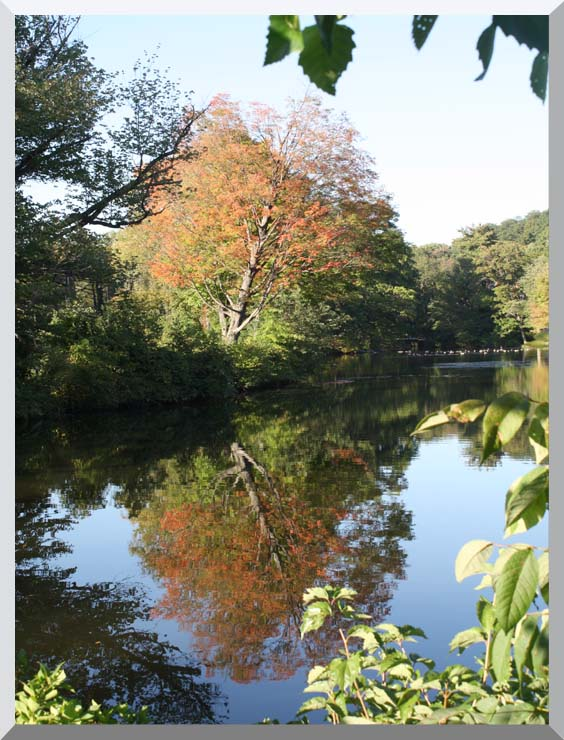 Kim O'Leary Photography Autumn Reflection stretched canvas art print