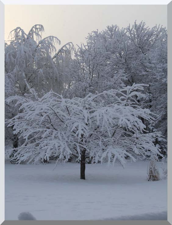 Kim O'Leary Photography Winter Creation stretched canvas art print