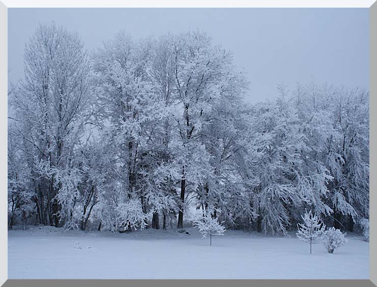 Kim O'Leary Photography Winter Wonderland stretched canvas art print