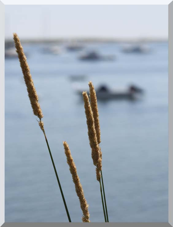 Kim O'Leary Photography Harbor Scene stretched canvas art print