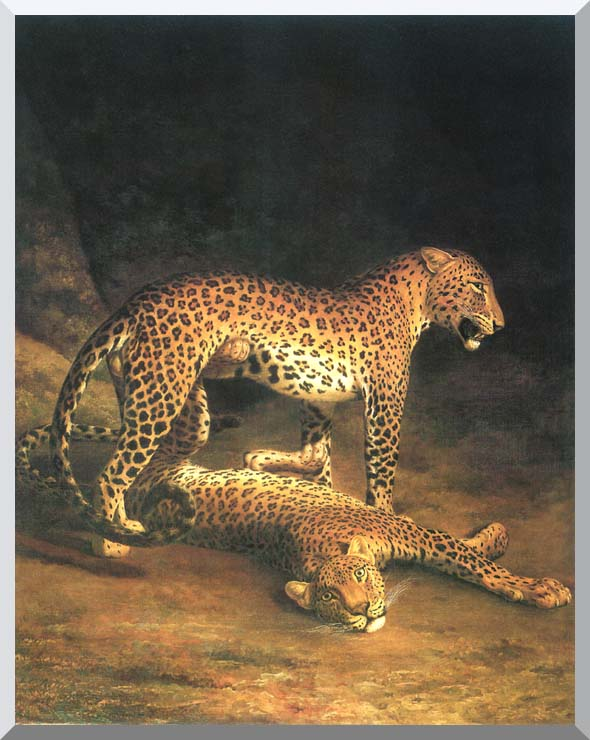 Jacques Laurent Agasse Two Leopards stretched canvas art print