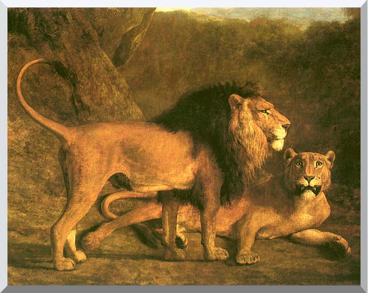 Jacques Laurent Agasse Two Lions, Life Size stretched canvas art print