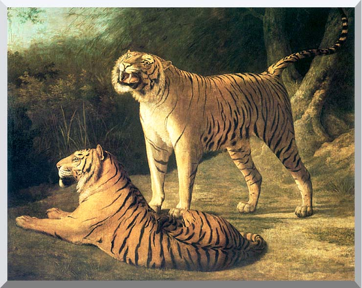 Jacques Laurent Agasse Two Tigers, Life Size stretched canvas art print