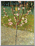 Vincent Van Gogh Almond Tree In Blossom stretched canvas art