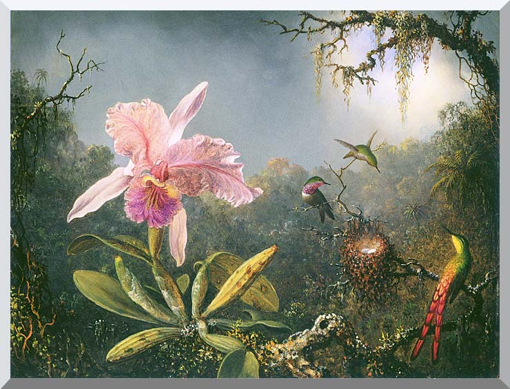 Martin Johnson Heade Cattleya Orchid and Three Brazilian Hummingbirds stretched canvas art print