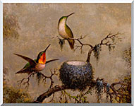 Martin Johnson Heade Hummingbirds And Their Nest stretched canvas art