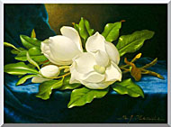 Martin Johnson Heade Magnolias On A Blue Velvet Cloth stretched canvas art