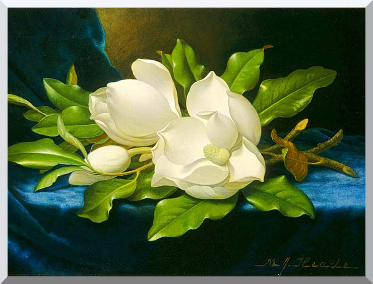 Martin Johnson Heade Magnolias on a Blue Velvet Cloth stretched canvas art print