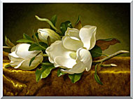 Martin Johnson Heade Magnolias On A Gold Velvet Cloth stretched canvas art