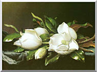 Martin Johnson Heade Magnolias Detail stretched canvas art