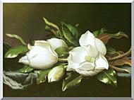 Martin Johnson Heade Magnolias Detail stretched canvas art