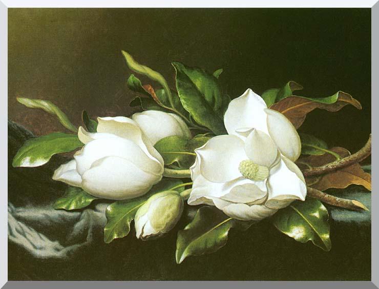 Martin Johnson Heade Magnolias (detail) stretched canvas art print