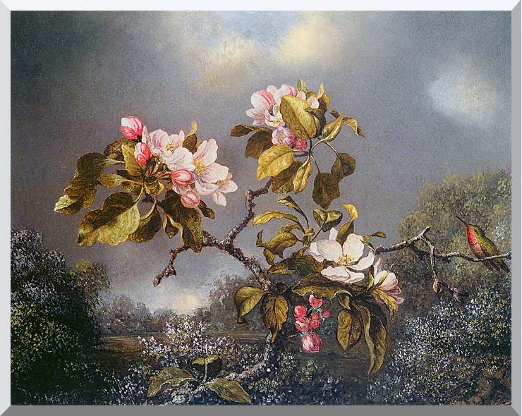 Martin Johnson Heade Apple Blossoms and Hummingbird stretched canvas art print