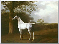 White Horse in a Meadow Stretched Canvas Art
