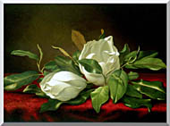 Martin Johnson Heade Giant Magnolias stretched canvas art