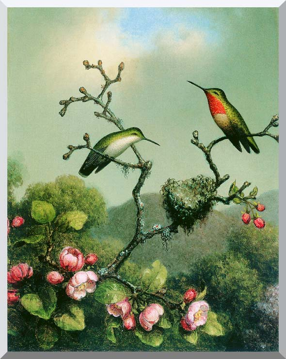 Martin Johnson Heade Ruby Throat of North America stretched canvas art print