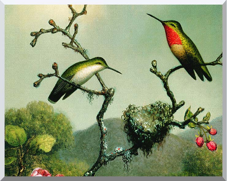 Martin Johnson Heade Ruby Throat of North America (detail) stretched canvas art print