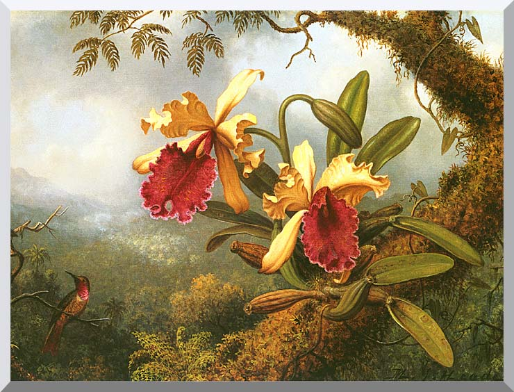 Martin Johnson Heade Orchids and Hummingbird stretched canvas art print