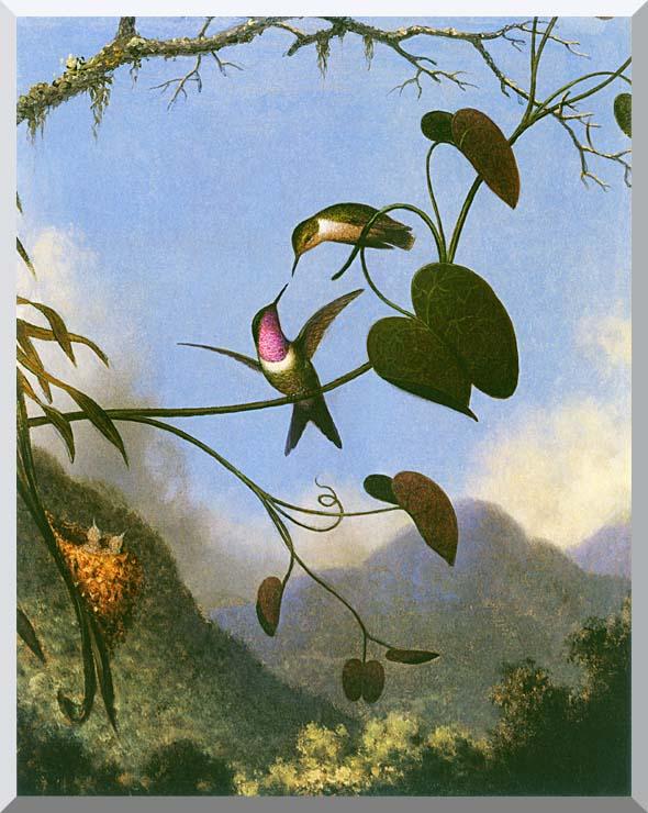 Martin Johnson Heade Amethyst Woodstar stretched canvas art print