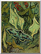 Vincent Van Gogh Emperor Moth stretched canvas art
