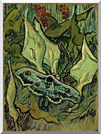 Vincent Van Gogh Emperor Moth stretched canvas art
